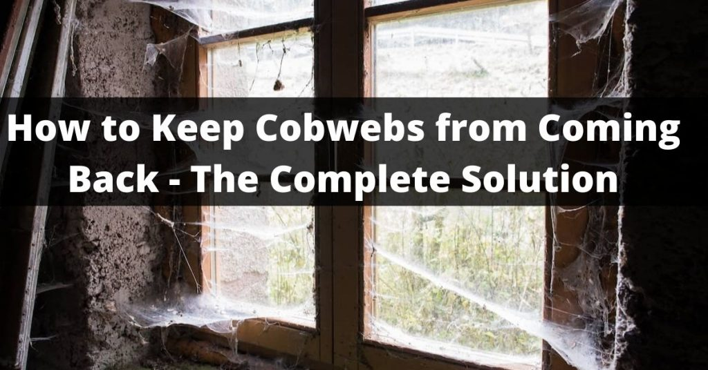 How to Keep Cobwebs from Coming Back